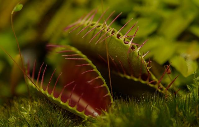carnivorous-plant-217187_640