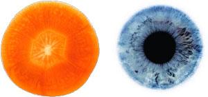 carrot-eye