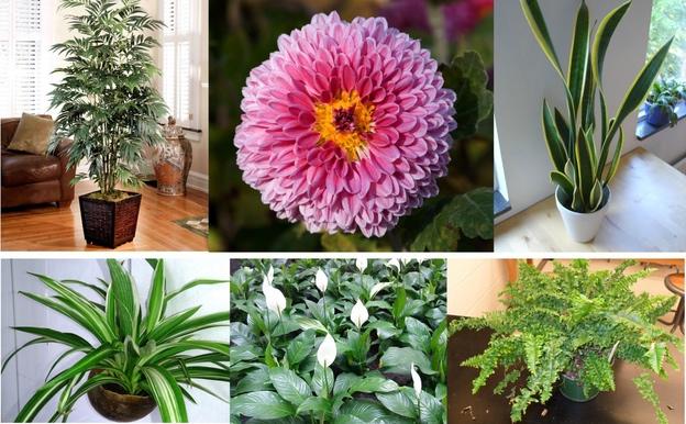 12 Pflegeleichte Zimmerpflanzen Die Am Besten Giftige Chemikalien