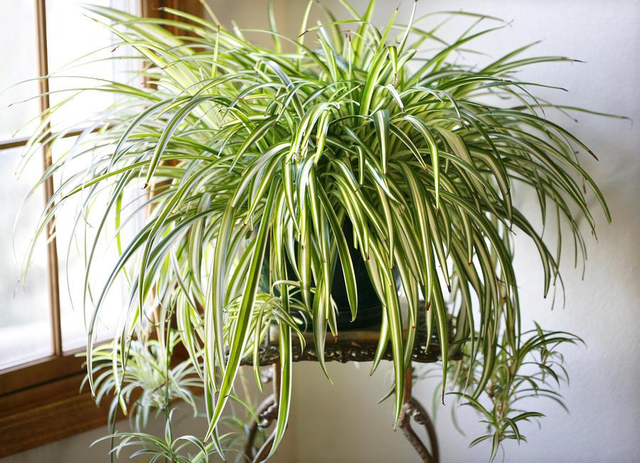 12 pflegeleichte Zimmerpflanzen, die am besten giftige Chemikalien ...