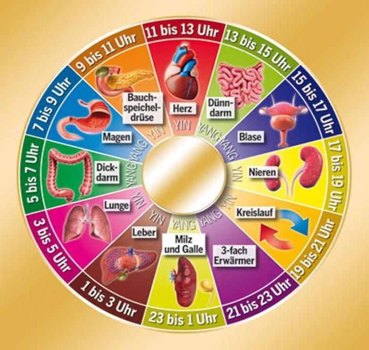 Die Energieuhr des menschlichen Körpers: Finde die optimale Zeit für ...