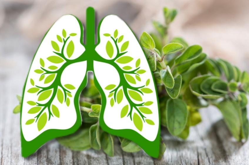 kräuter lunge