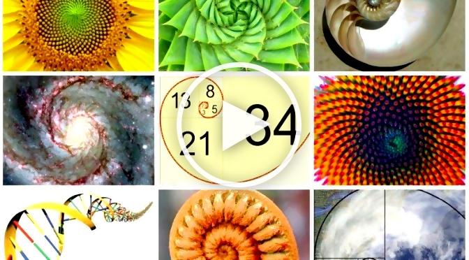 natur durch zahlen fibonacci folge in einem. Black Bedroom Furniture Sets. Home Design Ideas
