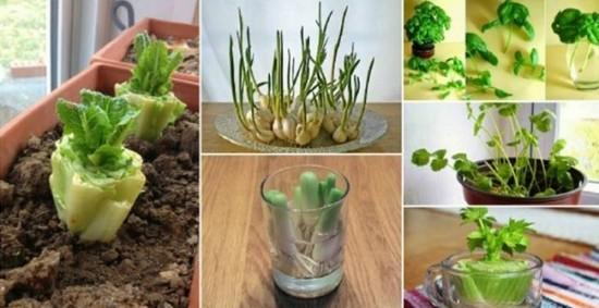 18 pflanzen die man von k chenabf llen nachwachsen lassen kann informationen und. Black Bedroom Furniture Sets. Home Design Ideas