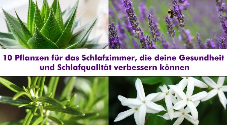 Jasmin Pflanze Im Schlafzimmer | 10 Pflanzen Fur Das Schlafzimmer Die Deine Gesundheit Und