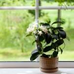 informationen und inspirationen f r ein bewusstes veganes und f rohes leben ein blog. Black Bedroom Furniture Sets. Home Design Ideas