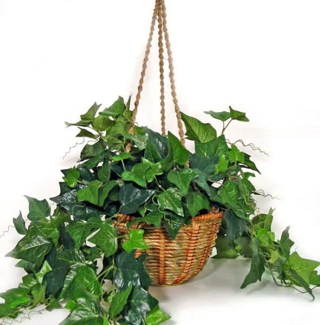10 Pflanzen für das Schlafzimmer, die deine Gesundheit und ...