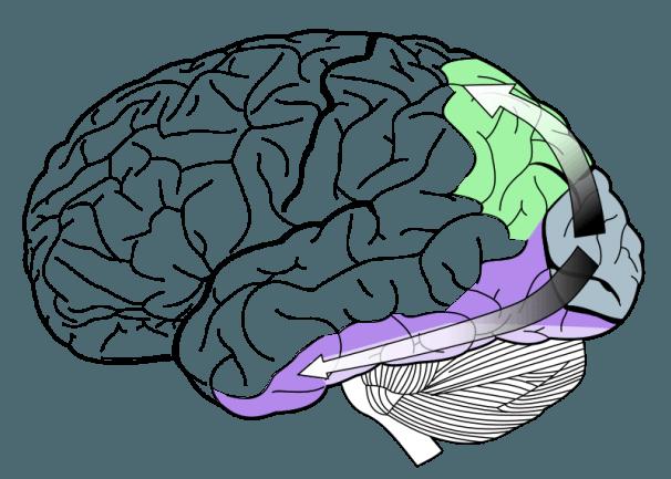 Gehirn3