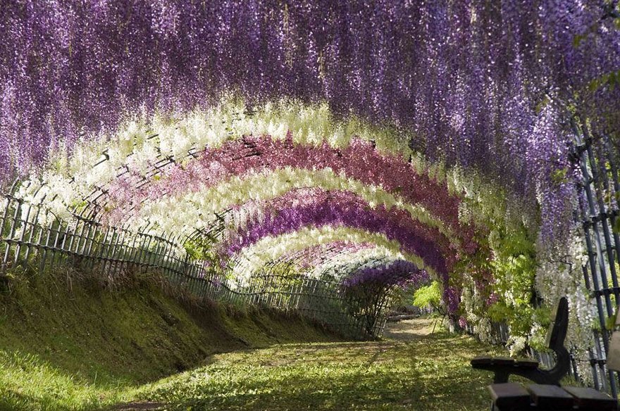 flower-tunnel
