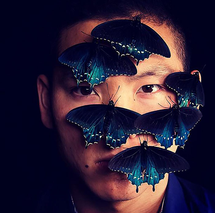 rare-blue-swallowtail-pipevine-butterfly-repopulation-tim-wong-25
