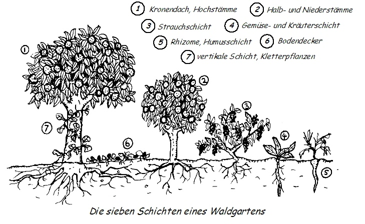 Waldgartenprinzip