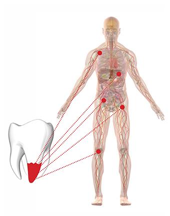 Zahn-Organ