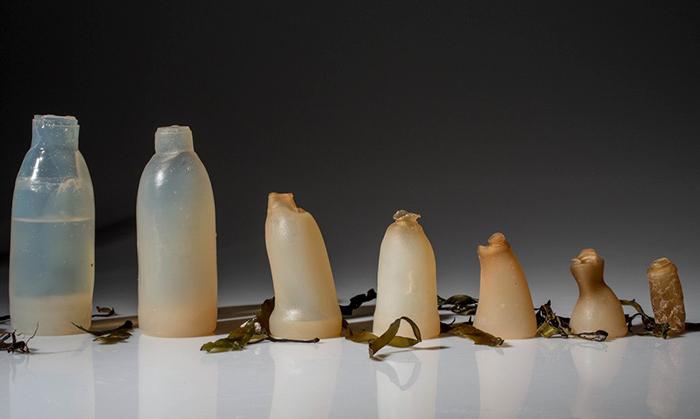 algen_plastik1