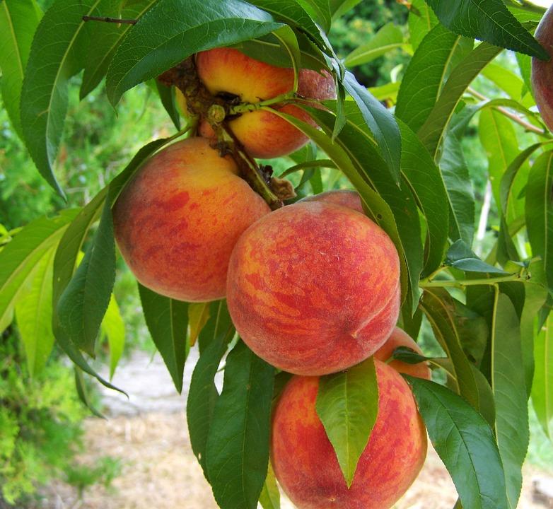 peach-846962_960_720