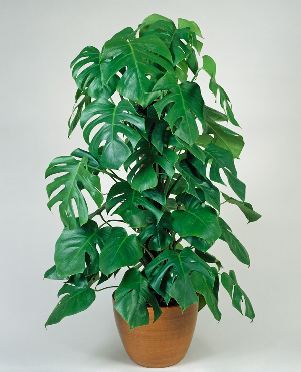 pflant13