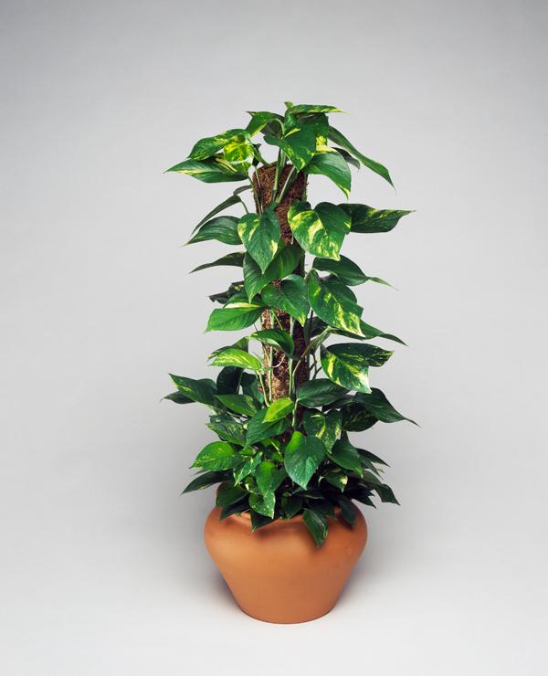 pflanze10