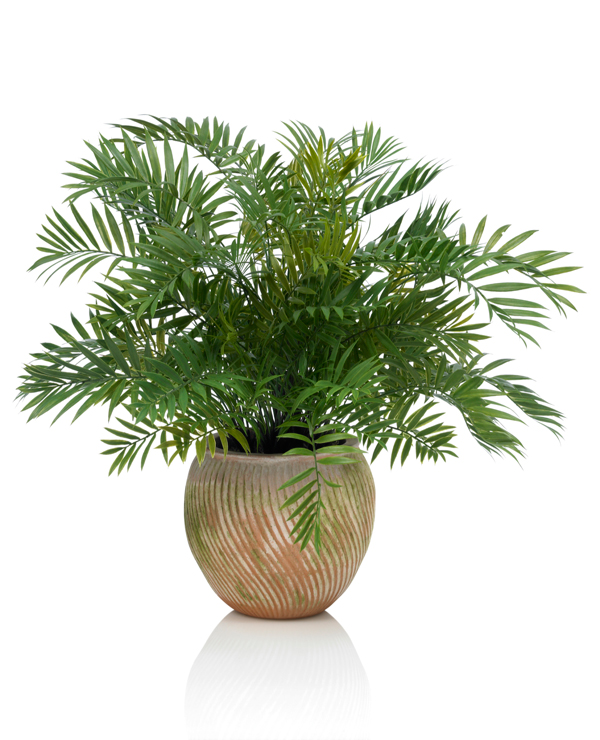 pflanze14