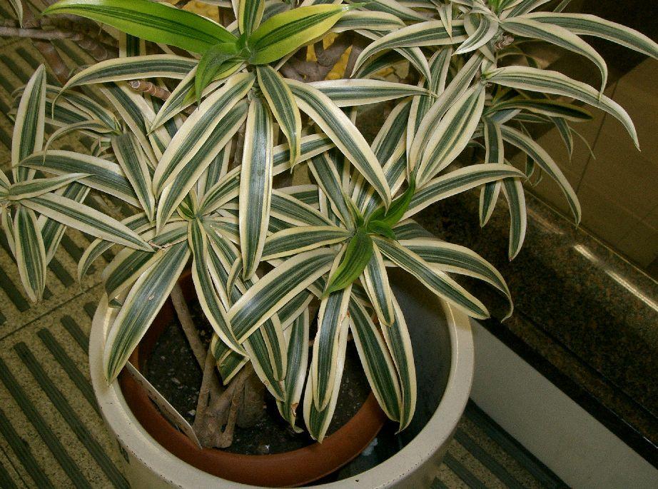 zimmerpflanzen3