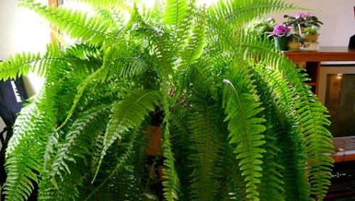 zimmerpflanzen6